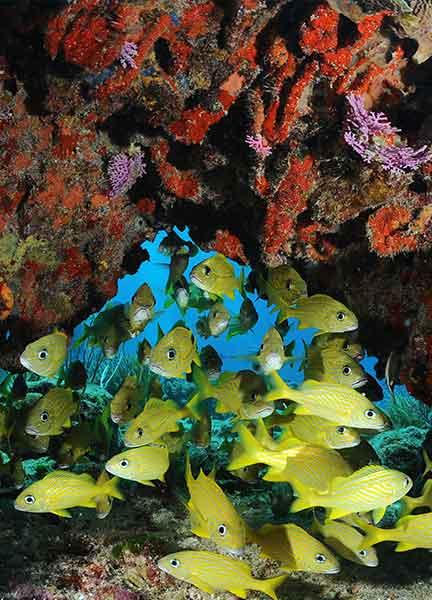 Dive Site Barracuda