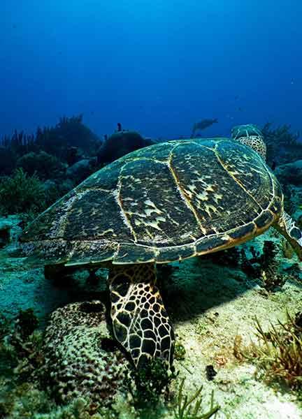 Dive Site Moc Che Deep