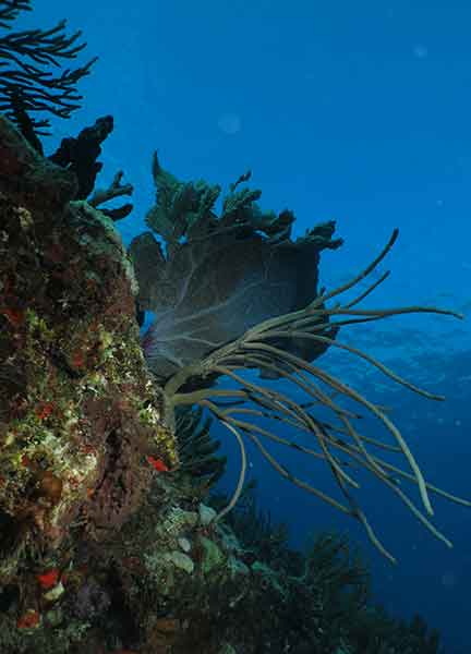 Dive Site Pared Verde