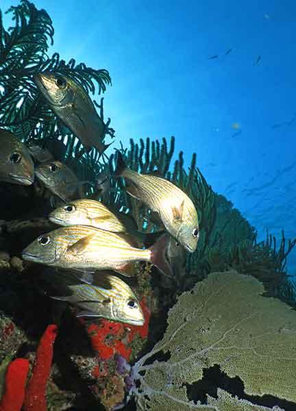 Dive Site Punta Venado