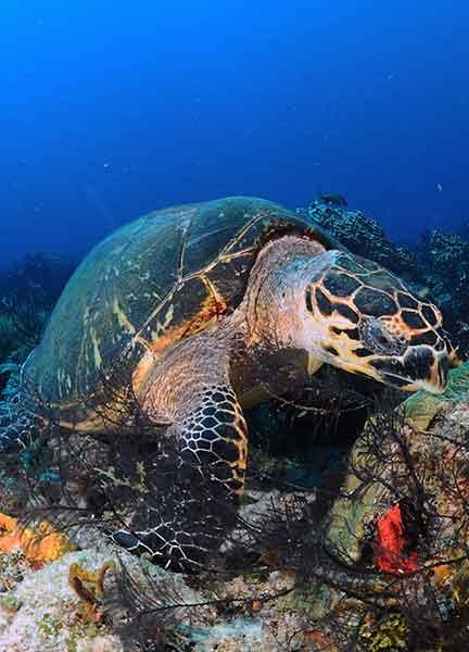 Dive Site Tortugas