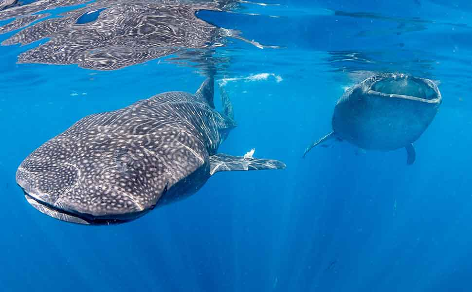 Diving in Isla Muhers