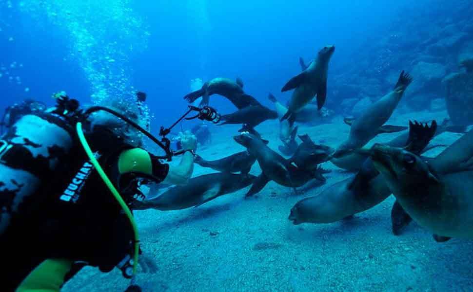 Diving in La Paz Baja California