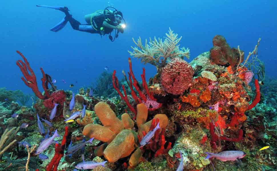 Diving in Puerto Aventuras