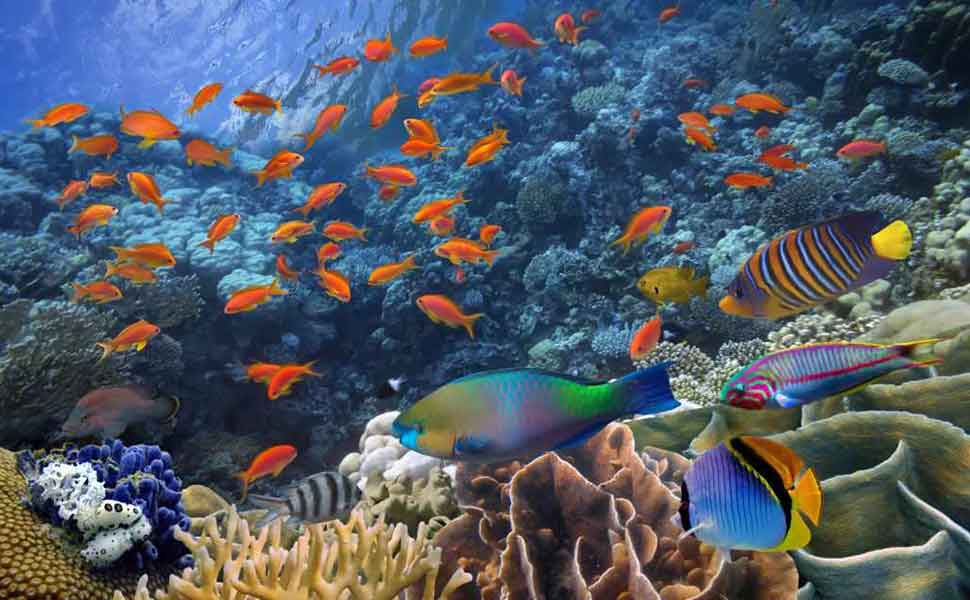 Diving on a coral reef in Cancun