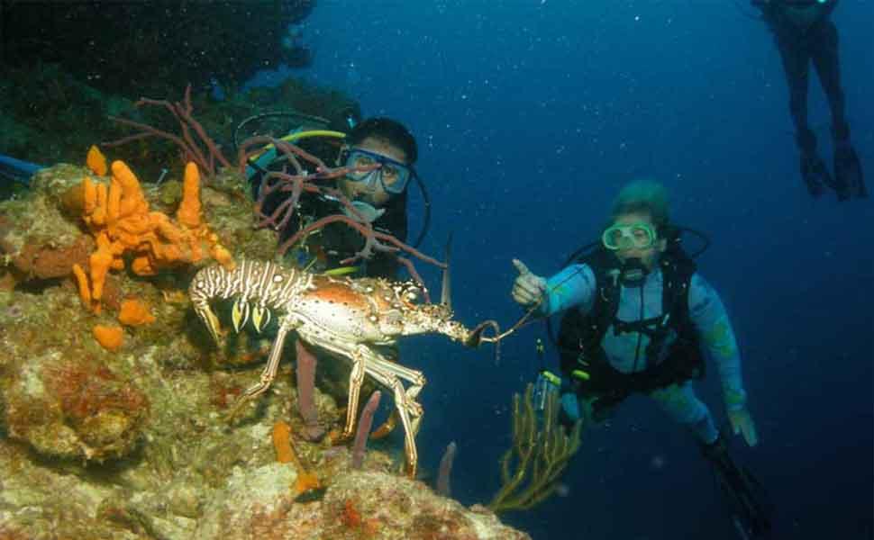 Lobster diving Cozumel