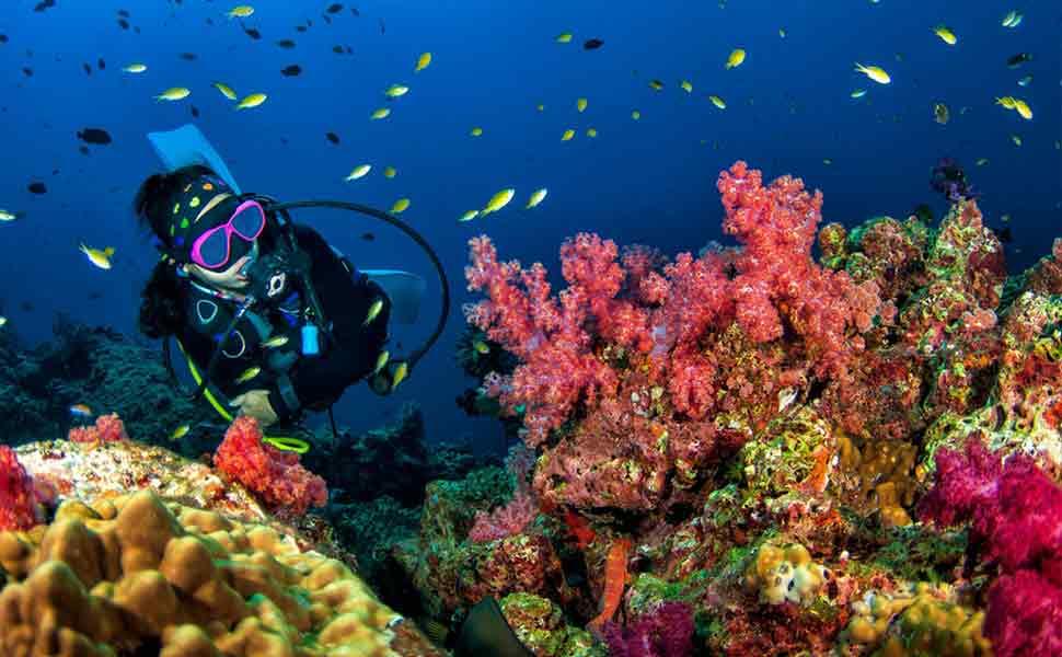 Reef diving Cozumel